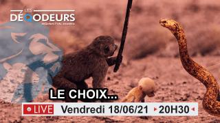 Le Choix… 18/06/2021