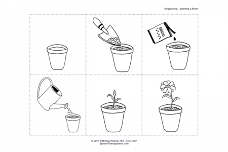Plant Growth Sequence Worksheet Sketch Coloring Page