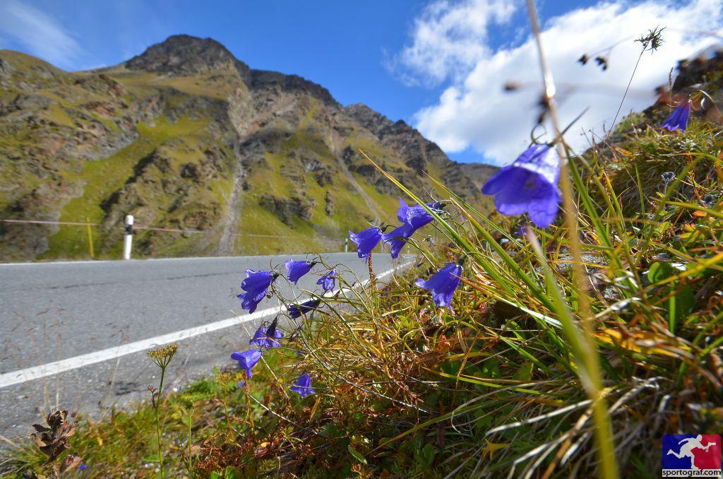 Alpen-Traum Südtirol
