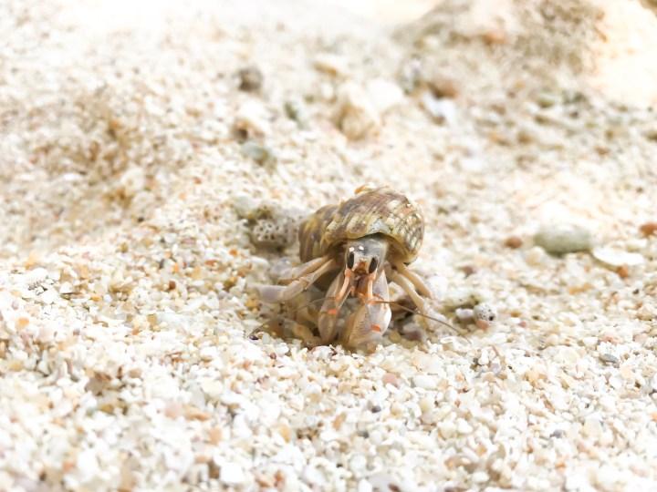 Dreaming of elsewhere sand snail sri lanka
