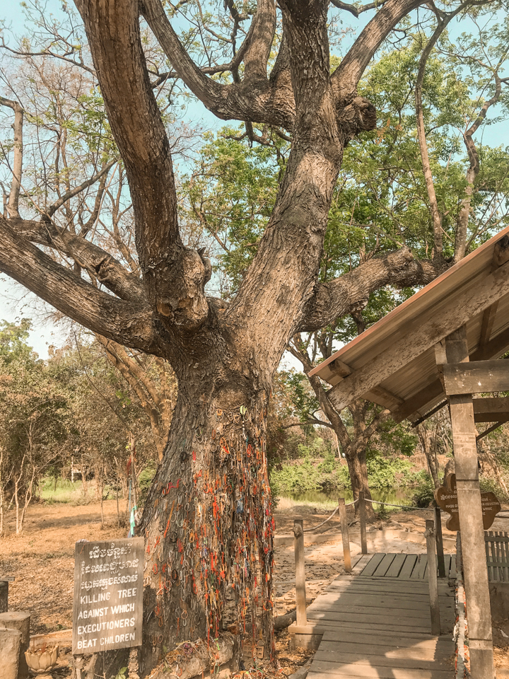 spellbound travels killing tree phnom penh cambodia