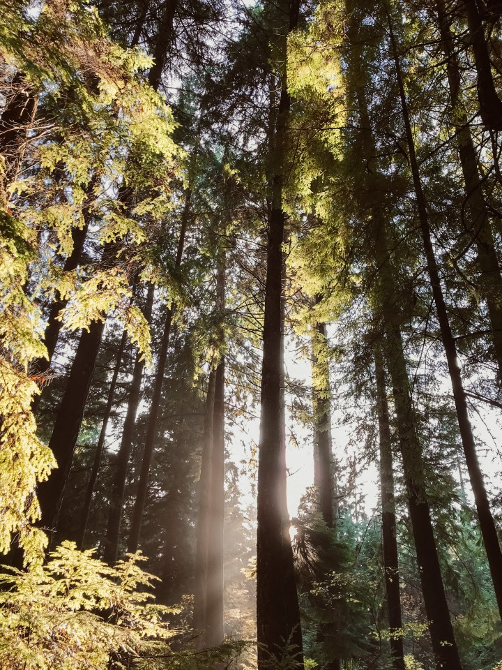spellbound travels stanley park vancouver