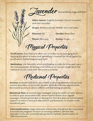 Lavender Magical Uses