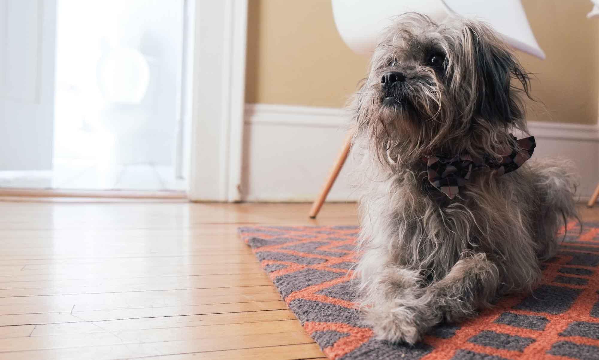 My Dog Arthur