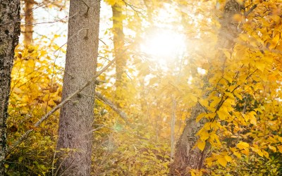 North to Leaves & Water – Duluth, Minnesota