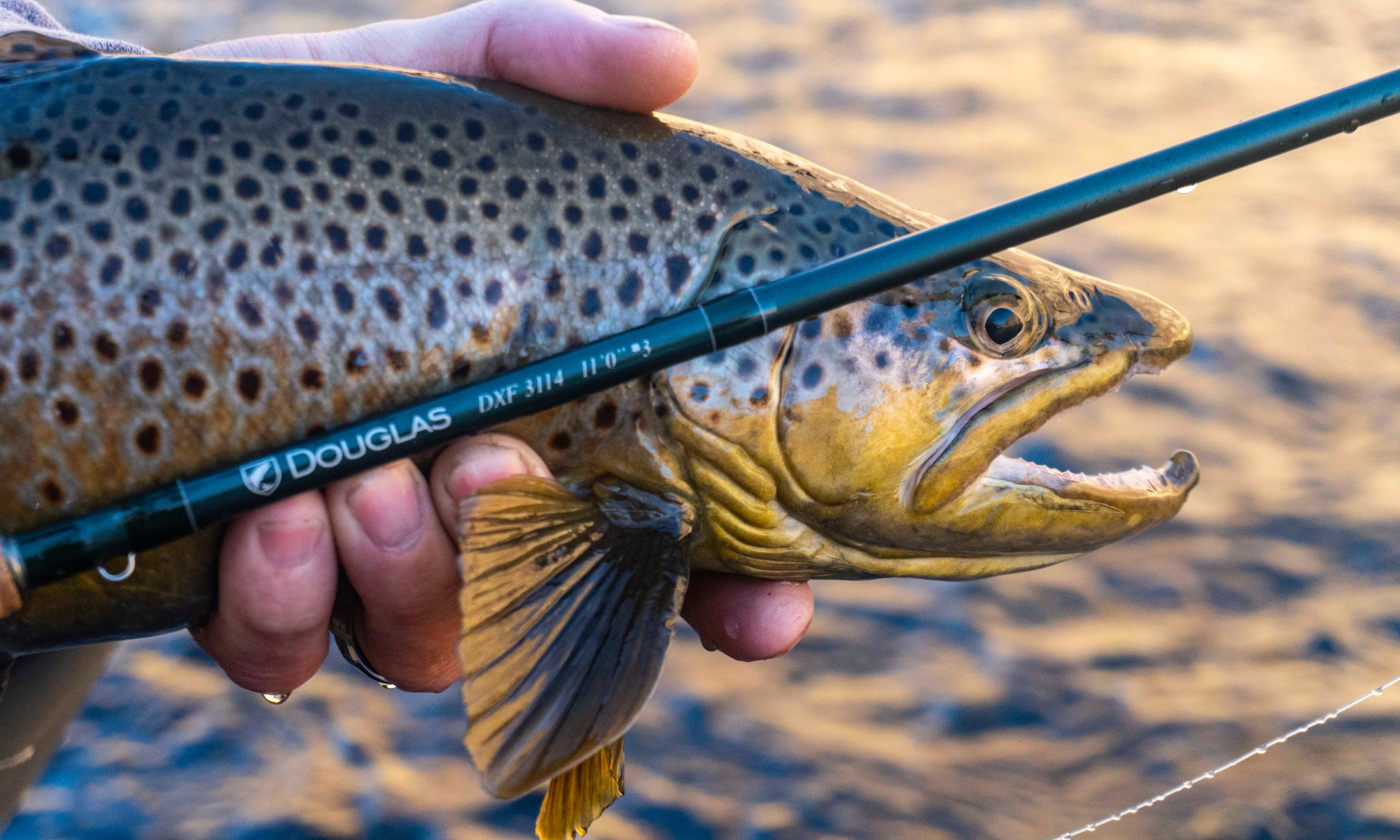 euro nymphing rod header image