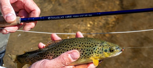 douglas lrs fly rod with fish