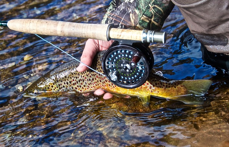 Respect the Redds: Fishing near Spawning Brown Trout