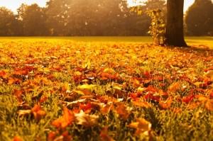 Fall Auto and Home Maintenance - Abington, Glenside, Jenkintown Homeowners Insurance company Spencer Insurance