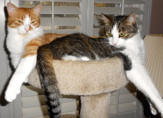"""Biscotti aka """"The Biscuit"""" and Tipper, hanging out on a drizzly day."""