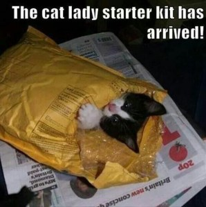 The perfect gift for Christmas! 😻