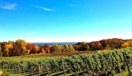 Vineyard, Michigan colors and Traverse Bay