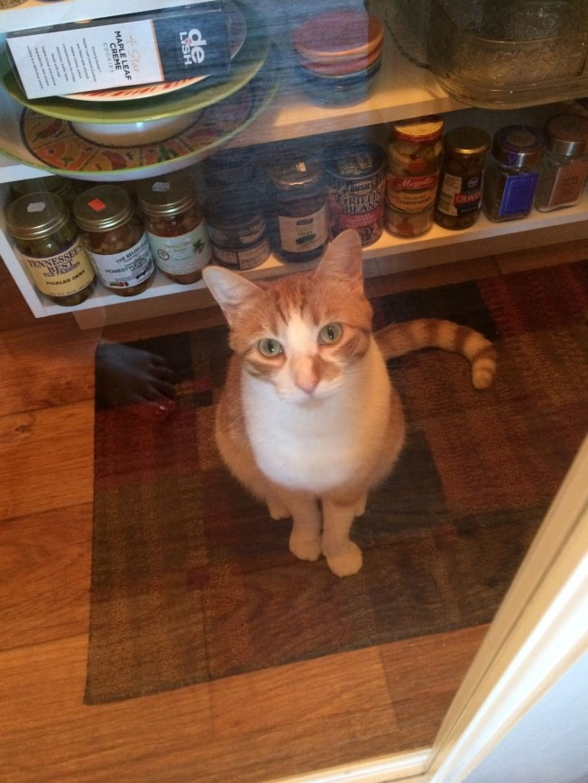 """Taking a little """"me"""" time in the pantry"""