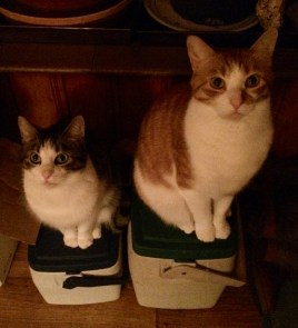 Their dry food is in those coolers