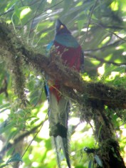 Why hello, Mr. Quetzal (photographed through a telescope)