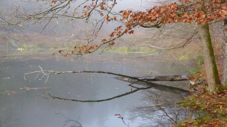 20190908-CCSBK-Bomigsee
