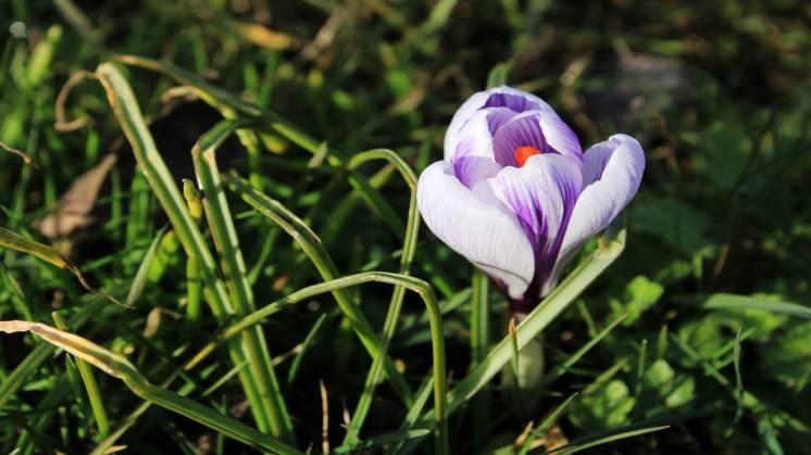 CCSBK-Frühling-Ostern-17