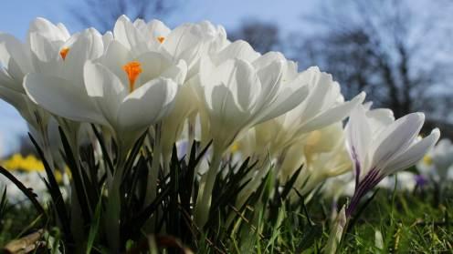 CCSBK-Frühling-Ostern-19