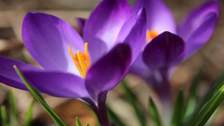 CCSBK-Frühling-Ostern-22