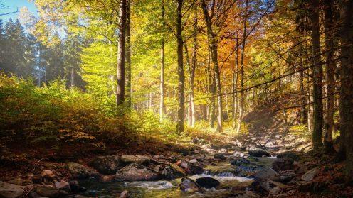 HTG-Herbst-Wald-5-1920
