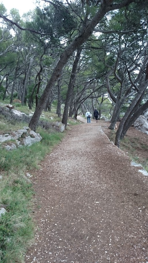 Här vandrade vi både länge och väl under pinjeträden – för att till slut få lov att vända.