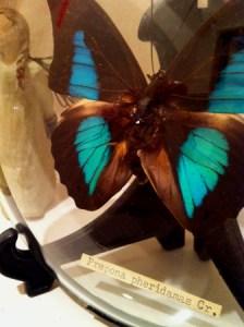 写真 1月29日 凍蝶は薬打たれしかに美しき