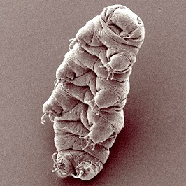 SPICe_2019_Blog_Economy_Sustainable Development Water Bear