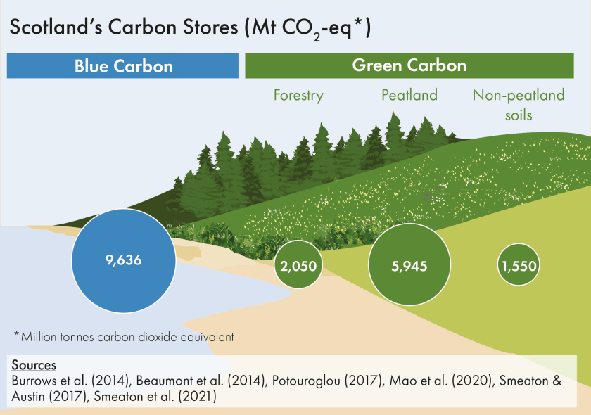 Infographic image showing Scotland's blue carbon stores in comparison with Scotland's green carbon stores.