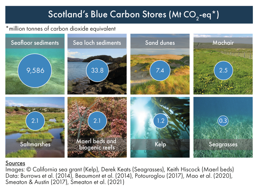 Compiled photographic images of Scotland's blue carbon habitats and species.