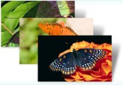 Download 'Awesome Butterflies' – Windows 7 Theme