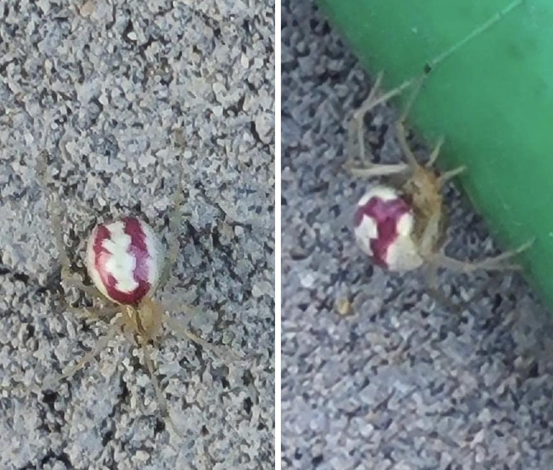 Unidentified spider in Oregon City Oregon United States