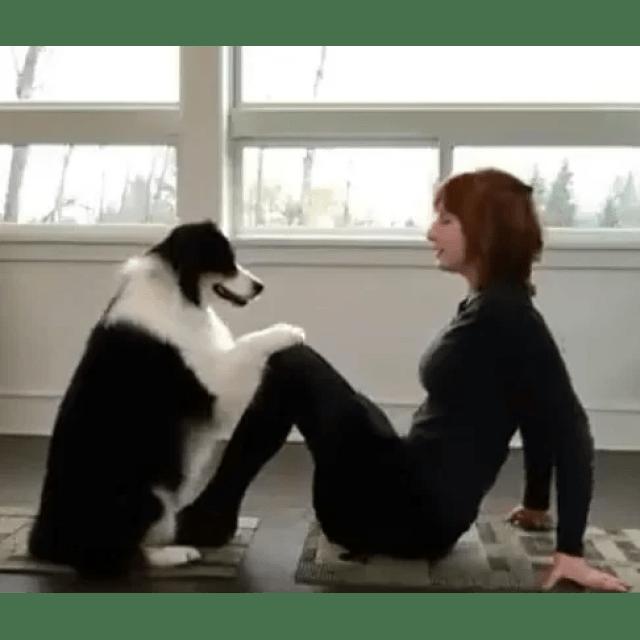 Image result for dog doing yoga video viral pics