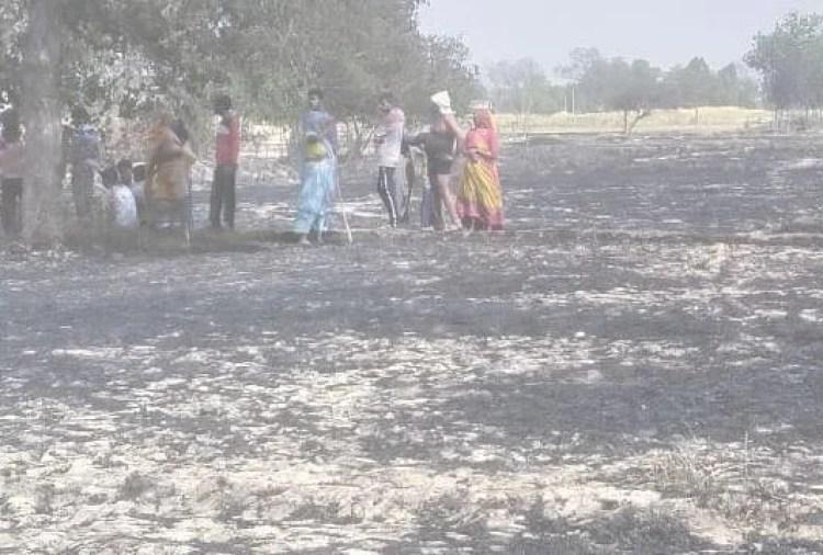 आग लगने के बाद खेत जली फसल की राख। संवाद