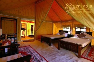Spider-India-Camping-tent-room