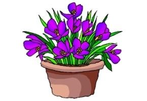 Malvorlage Blüte Kostenlos