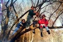 Baum auf dem Spielplatz