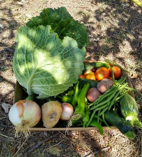 verdure-fresche-di-stagione