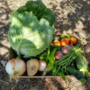Verdure di Stagione Fresche