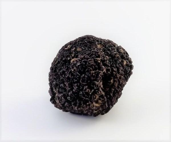 tartufo nero fresco
