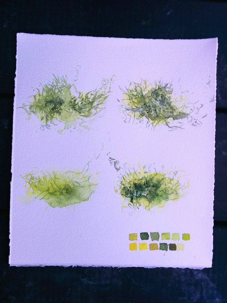 lichen - exemplifies lots of techniques, wet into wet, dry brush details layered on top, gouache details, glazing...