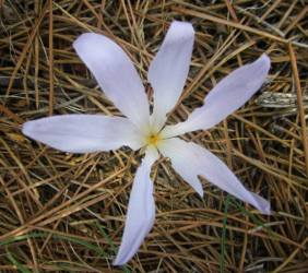 Another flower