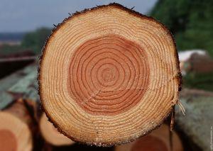 корчування дерев Хмельницький