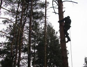 порізка дерева Хмельницький