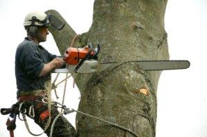 Обрезка дерева в Хмельницком
