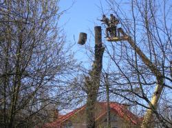 розчистка дерев Хмельницький