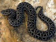 totem_snake