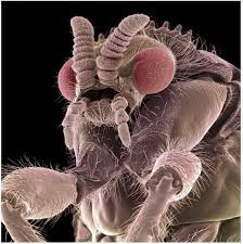 microscopic monsters (32)