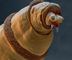 microscopic monsters (43)