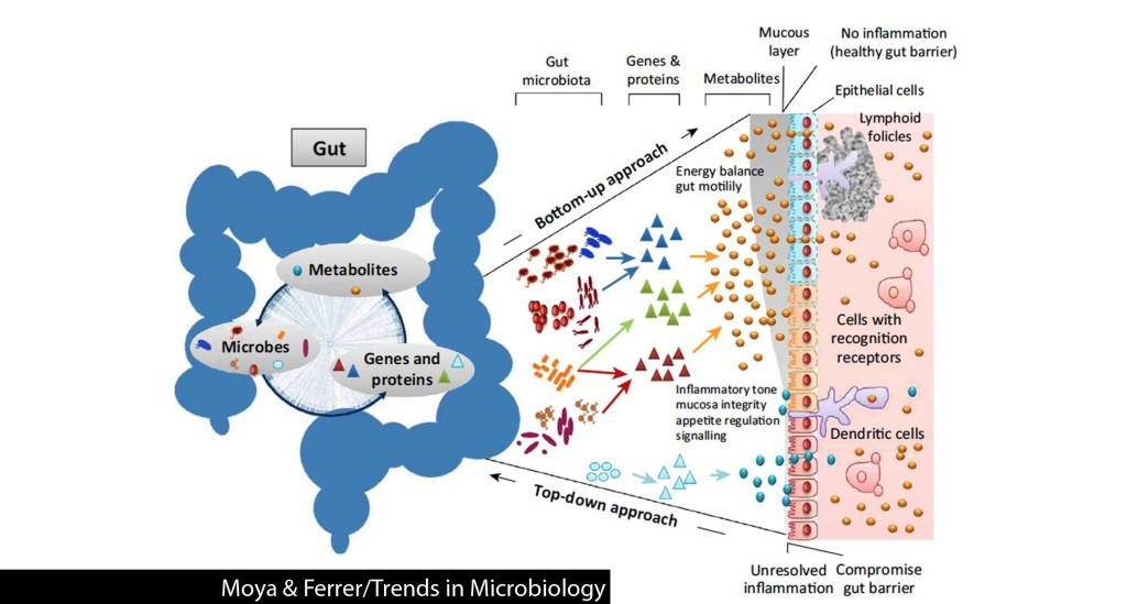 gut health microbiome