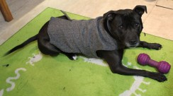 Lucky Benji is the lucky owner of the first item made in the Candipops studio-his coat!